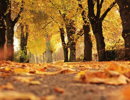 5 Fall Season Projects to Refresh Your Financial Results